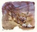 猫/あ〜〜良く寝たな〜〜。